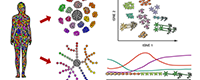 Gene-Regulation-of-Cell-Identity2