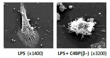 LPS-C4BP