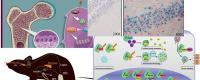 403senyalitzaciocelularbiologiaos