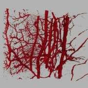 Sinapsis-ALlobet_1196206075